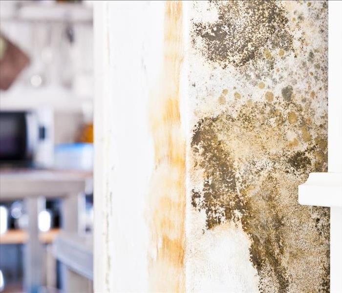 Why Servpro How Our Experts Identify Mold Growing In Your San Jose Home